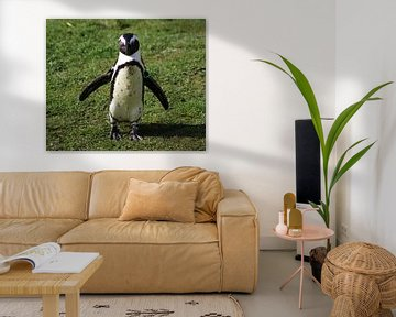 Zwartvoetpinguïn von michael meijer