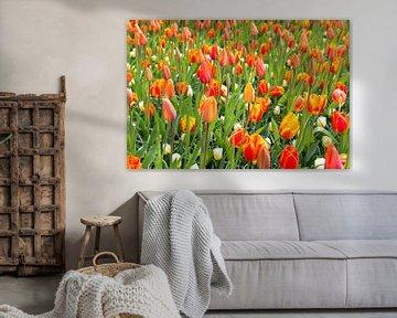 veld met oranje tulpen op de keukenhof von Compuinfoto .