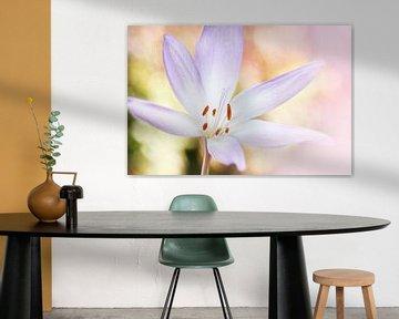Bright flower von Michelle Zwakhalen