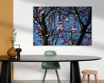 Pink blossom von Robin Groen