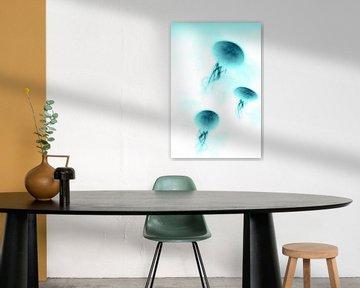 Jellyfish N.2 von Olis-Art