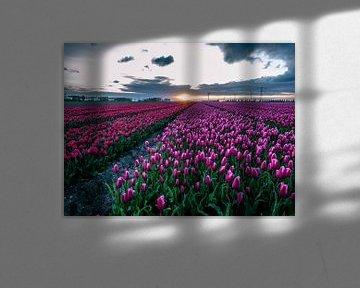 Tulpenvelden bij zonsopgang in biddinghuizen von Dennis van Berkel
