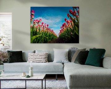 Roze tulpen in kikkerperspectief von Dennis van Berkel