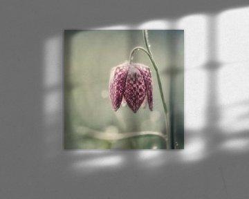 Frühlingstraum von Daniela Beyer