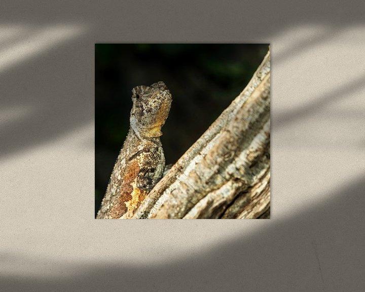 Sfeerimpressie: De Mopskopleguaan - Uranoscodon superciliosus van Rob Smit