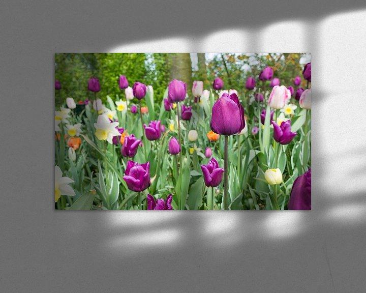 Sfeerimpressie: paarse tulpen in de keukenhof van Compuinfoto .
