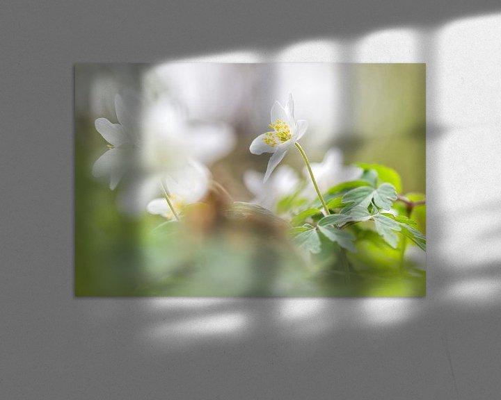 Sfeerimpressie: Bosanemoon in het groene bos van Arja Schrijver Fotografie