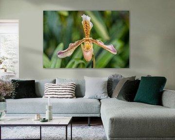 Orchidee 5 von John van Weenen