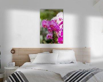 orchidee 2 von John van Weenen