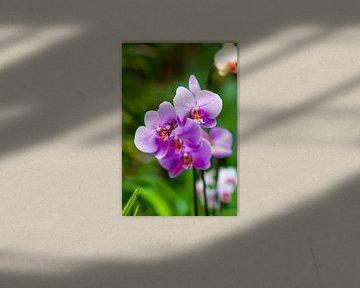 Orchidee 10 von John van Weenen