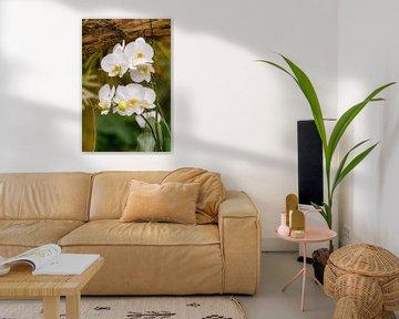orchidee 7 von John van Weenen