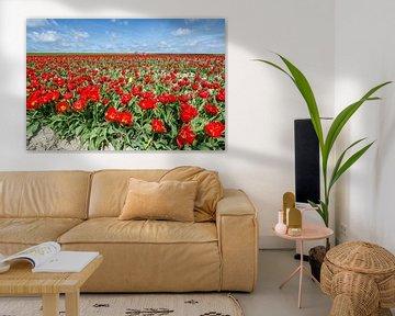 rood tulpenveld onder de zon von Tjiske Regnerus