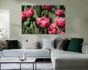 Tulpjes von Pamela Fritschij