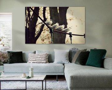 vogels / birds / oiseaux von melissa demeunier