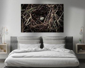 Vogelnest von Martzen Fotografie