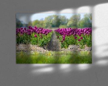 Paarse Tulpen sur Martijn van der Nat