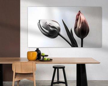 Two Tulip van Olis-Art