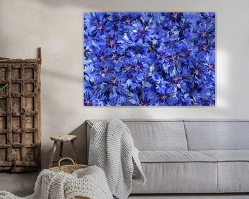 Kornblumen-abstrakt