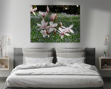 Bloeiende tulpenboom - Magnolia's bloeien in het voorjaar (Magnolia's) van RaSch-BS_Design