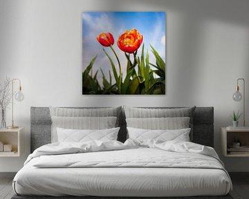 Nederlandse Tulpen von Ronald Huiberse