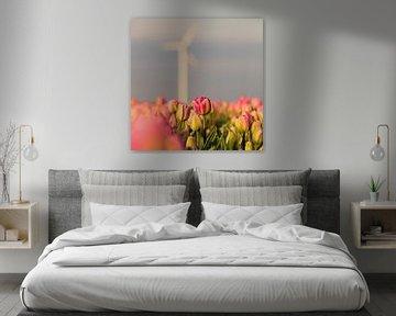 Nederlandse Tulpen onder een windmolen von Ronald Huiberse