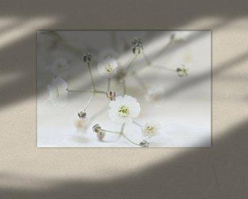 Sneeuw wit van Carla Mesken-Dijkhoff