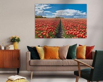 Zwiebelfelder mit Tulpen in voller Blüte von eric van der eijk