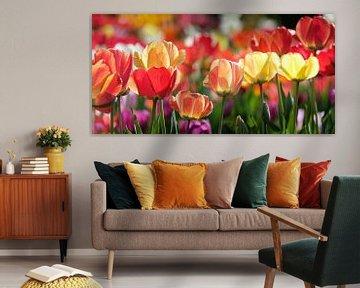 Tulpen von Rudy De Maeyer