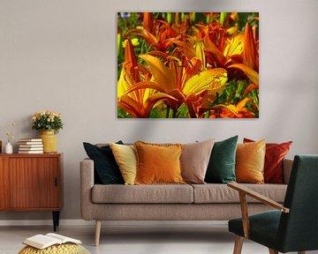 Orange und gelbe Lilien (Iris) von RaSch-BS_Design