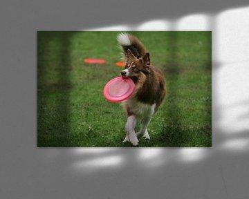 Hond met roze frisbee von Renate Peppenster