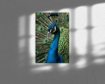 Blauwe pauw von Renate Peppenster