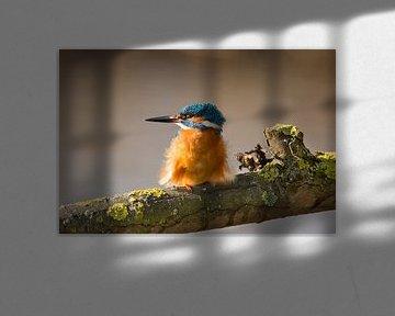Ijsvogel op een tak. von Michar Peppenster