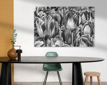 Tulpen in Schwarz-Weiß von Foto Amsterdam / Peter Bartelings