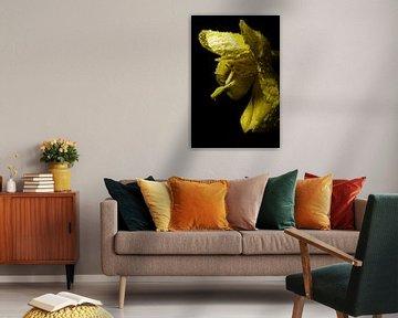 Yellow flower von Alexander van der Sar