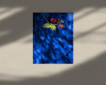 Bloem op Blauw von Ton van den Boogaard