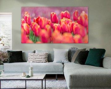 Tulpenveld van Jeannette Kliebisch