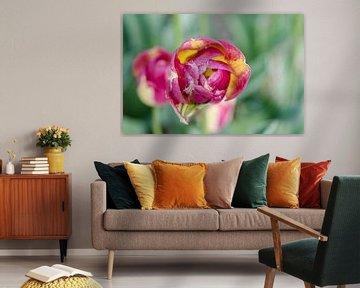 Tulpvanboven von Yvonne van der Meij