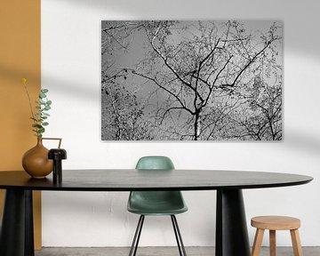Black&White Tree van Alexander van der Sar
