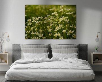 Voorjaarsbloemen von Arno Wolsink