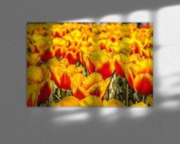 Kleurrijke tulpen von Stedom Fotografie