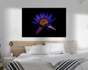 Purple van Mike van den Brink