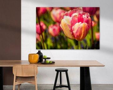 Roze tulpen in de zon von Stedom Fotografie