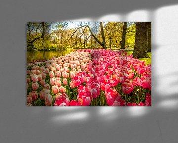 Een veld vol met tulpen von Stedom Fotografie