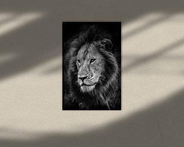 Le roi des animaux sur jowan iven