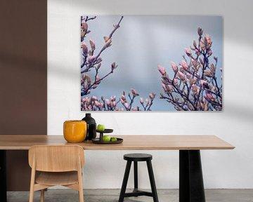 Magnolia Blumen in der Knospe