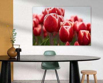 Rood met witte tulpen von Ad Jekel