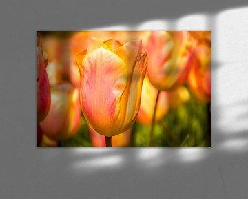 Fleurige tulpen von Stedom Fotografie