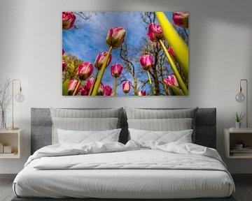 Tulpen reiken tot aan de lucht von Stedom Fotografie