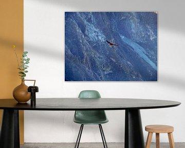 Bird van David Sam