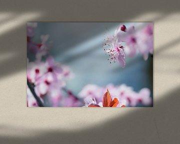 Rosa Blüte im Detail von Arja Schrijver Fotografie